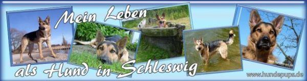 Hundeleben in Schleswig